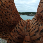 petitfaucon-du-lac