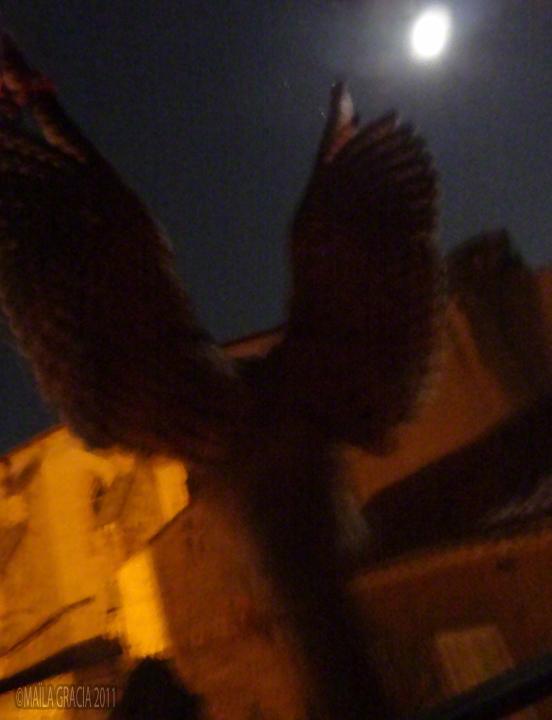 """""""Faucon de Nuit dans le quartier du Saint-Esprit"""" 2011"""